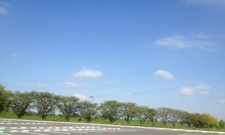 敷地西側から隣接の桜並木と都幾川土手を望む