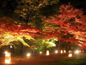 森林公園の紅葉ライトアップ